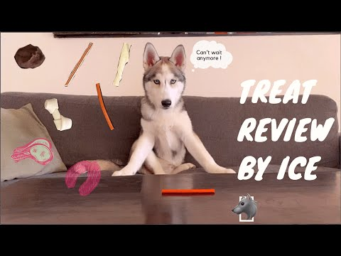 husky-puppy-tries-5-different-treats-!-(treat-review)---he-is-hungry-all-the-time-!
