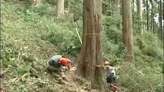 日本最古の人工林・歴史の証人【かわかみ村・下多古村有林】第3回