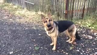 День глаза 👀 собаки что пошло не так ? Зашквар 👧🏻👀🤡🙁😑