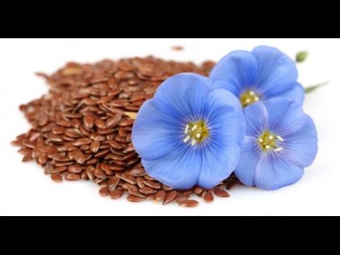 Можно ли есть сырыми семена льна измельченное семя льна