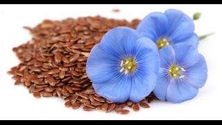 Льняные семечки. Польза применения семян льна.