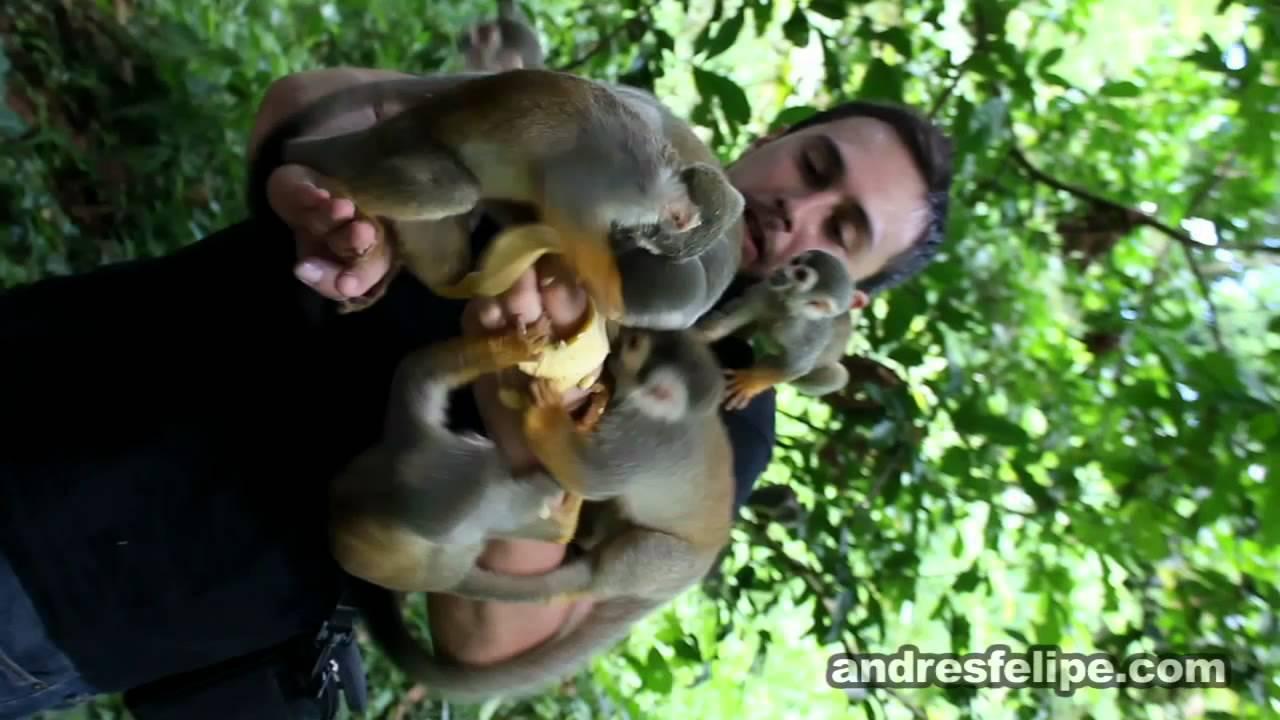 la isla de los micos
