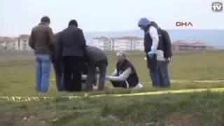 В Турции бродячие собаки загрызли женщину