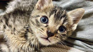 【雑談】拾った子猫の名前を決めました