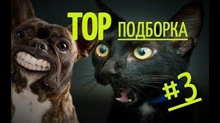 СМЕШНЫЕ ЖИВОТНЫЕ 2019 Top ПОДБОРКА 3
