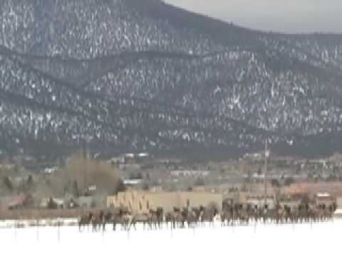 Elk visit taos new mexico feb 8 2008 youtube for New mexico game and fish login