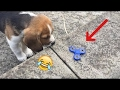 Top 30 Fidget Spinner vs. Animals funny cute pets dogs cats Compilation 2017