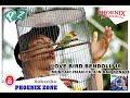 Aksi Si Bendoll  Dari Bali  Mp3 - Mp4 Download