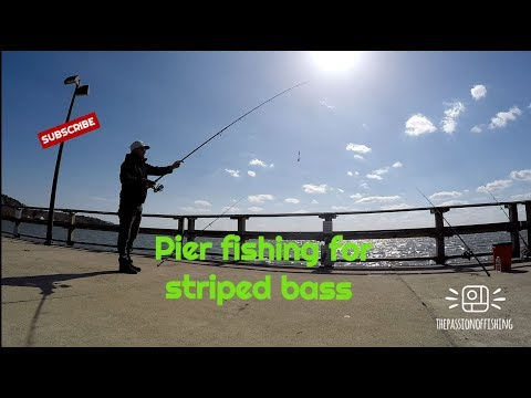 FISHING FOR STRIPED BASS AT METAPEAKE PIER/ STEVENSVILLE MD