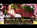 Download Tavi de la Negresti - Tu esti floarea florilor (NOU 2019)