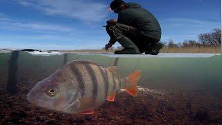 Весенняя Рыбалка на льду Щука на жерлицы Подводная съемка