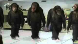happy birthday dancing chimps style