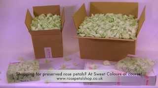 Preserved rose petals Green