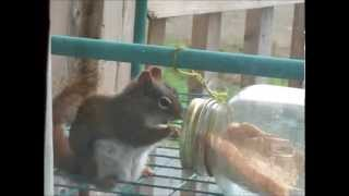 Squirrels In Feeder