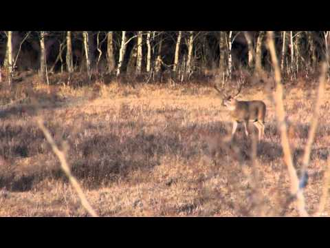 Canadian Whitetail Television - Triple Beam Dreams