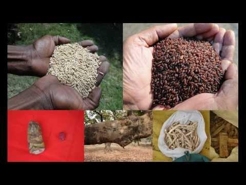 Folk Rice Formulations for Interstitial Lung Disease: Pankaj Oudhia