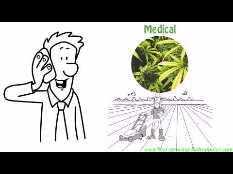 Medical Marijuana Jobs | How To Grow Weed & Get A Degree!