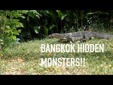 Top places to visit in Bangkok | Lumpini Park | Thailand guide | ep 7