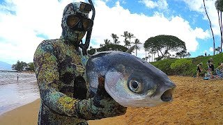 Spearfishing Hawaiian Style - Big Catch!!