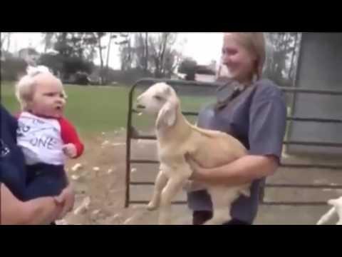 videos gracioso de bebes, mujeres belleza, fotos de mujeres, fotos comicas de mujeres, imagenes de