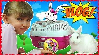 LOL конфетті ПОП - такий класний, аж слинки течуть! Купили переноску для кролика Намистинки (VLOG)