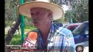Puntual TV [20090902] Brucella y la tuberculosis afectan al ganado bovino