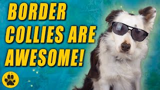 Border Collies are Awesome
