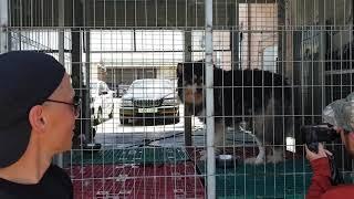Эти Русские в Корее 2: Собака-динозавр