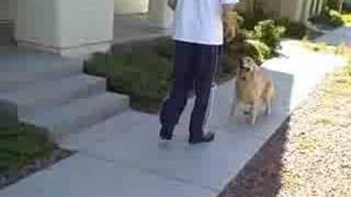 Teach Your Dog To Walk Backwards