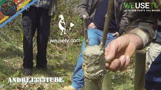 Innesto a spacco su castagno selvatico (parte 2 di 5) - Tecniche di innesto alberi da frutto