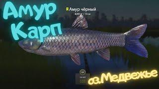 Русская рыбалка 4 РР4 о Медвежье АМУР КАРП