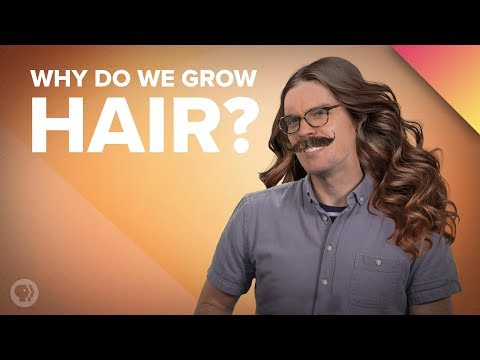 Why Do We Grow Hair Where We Do?