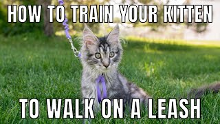 How to Train Your Kitten to Walk on a Leash | LeashTraining Tips