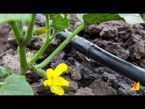 Curso a Distância Projeto de Irrigação Localizada - Lâmina de Irrigação