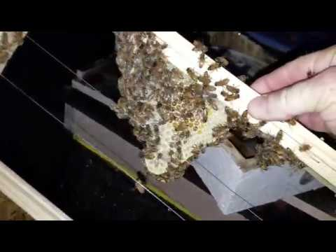 Why Are My Honey Bees Stinging Me? Must See