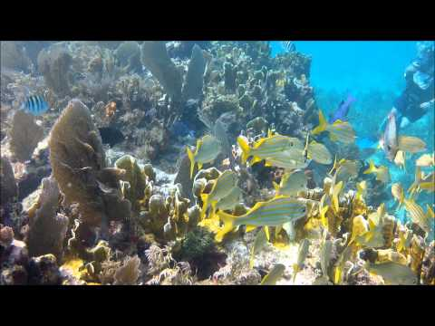 Molasses Reef Moments 6-30 thru 7-7-2012 Sharks, turtle, goliath groupers and so much more