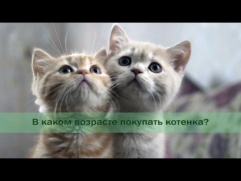С какого возраста котенка можно отлучать от матери?