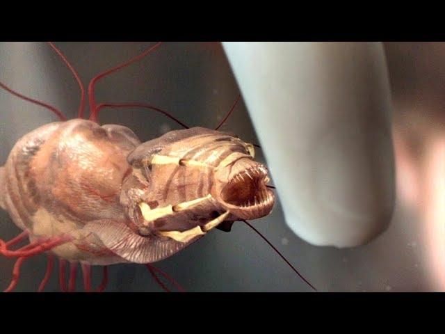 外星生物只有5厘米,遇水就会苏醒分裂,变成巨大的怪物!速看科幻恐怖电影《夺命高校》