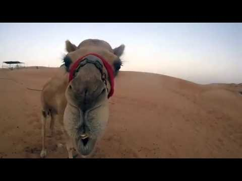 United Arab Emirates (U.A.E.) Travel Video