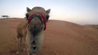 United Arab Emirates (U.A.E.) Travel Video