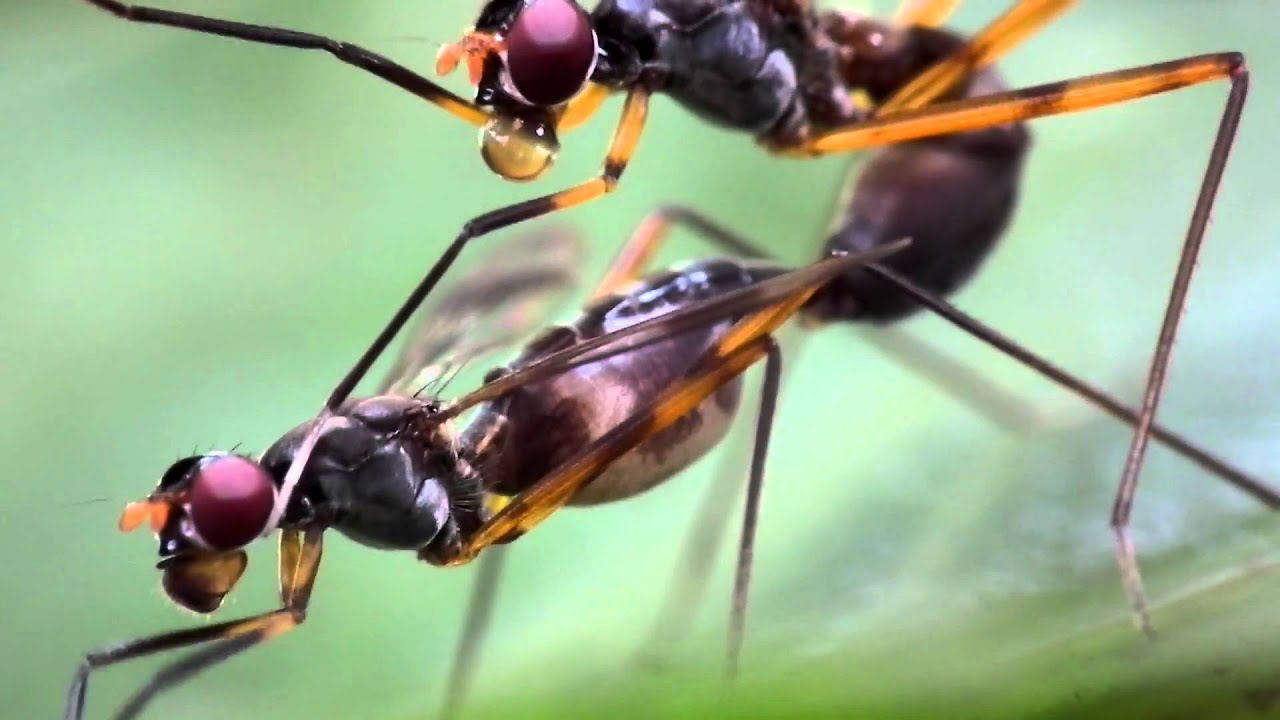 what is the wasp sexual reproduction through