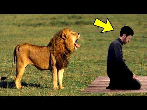 اقترب منه أسد عندما كان يصلي.. لن تصدق ماذا فعل.. شاهد المفاجأه المرعبه !!