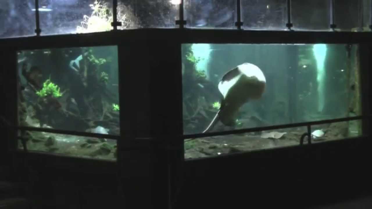 la r 233 fraction dans l aquarium