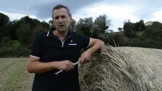 Farine e pasta artigianale: il Pastificio Morelli