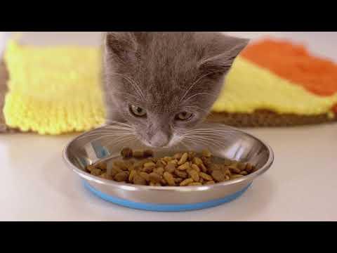 Purina ONE & SPCA - Sylvie's Journey (extended)