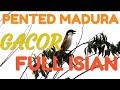 Kicau Merdu Cendet Pented Madura Full Durasi Dan Irama Lagu Mantap Geeeeeng  Mp3 - Mp4 Download