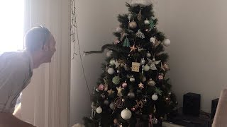 Family Find Snake Hiding In Christmas Tree