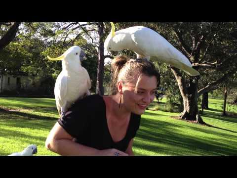 Cacatua - Australian Bird - Sara Müller