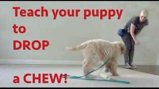 Preventing Resource Guarding In Puppies- Teach Drop The Chew
