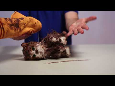 How to Clean Up an Oil Spill - Scamwow!